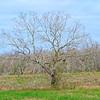 Winter Tree in the Landscape