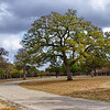 Live Oak and Winding Road