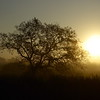Tree , Landscapes