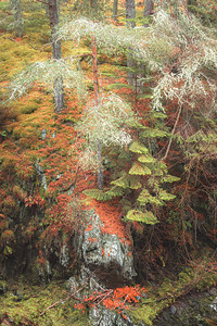 Forest at Bruar. Perth and Kinross, Scotland