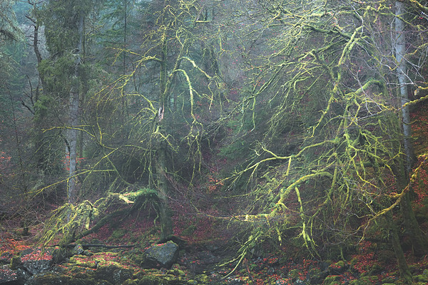 Coming to Terms with Each Other. Dunkeld, Scotland,