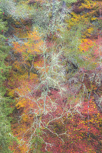 Forest Fireworks. Perth and Kinross, Scotland