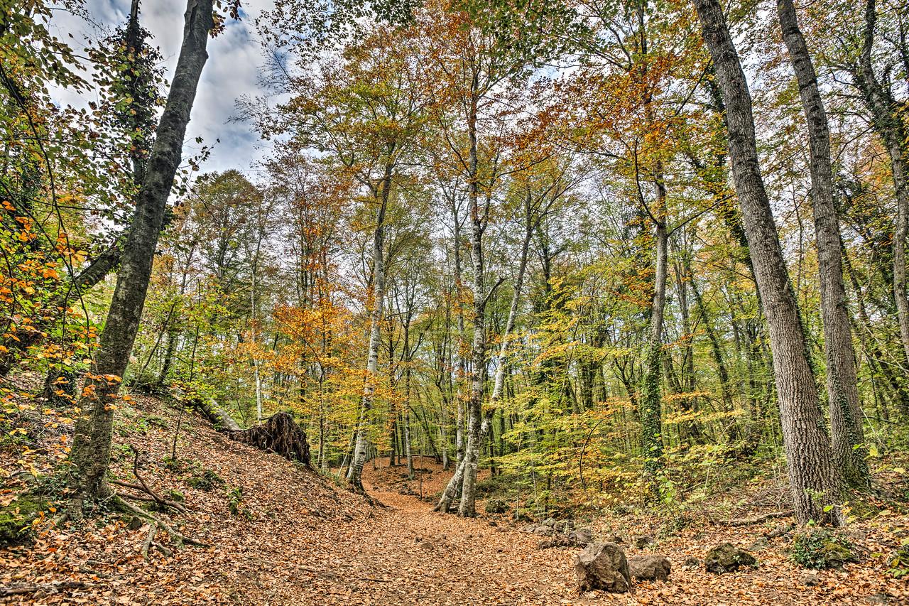 Walking Throw Jordan's Beech Wood (Catalonia)