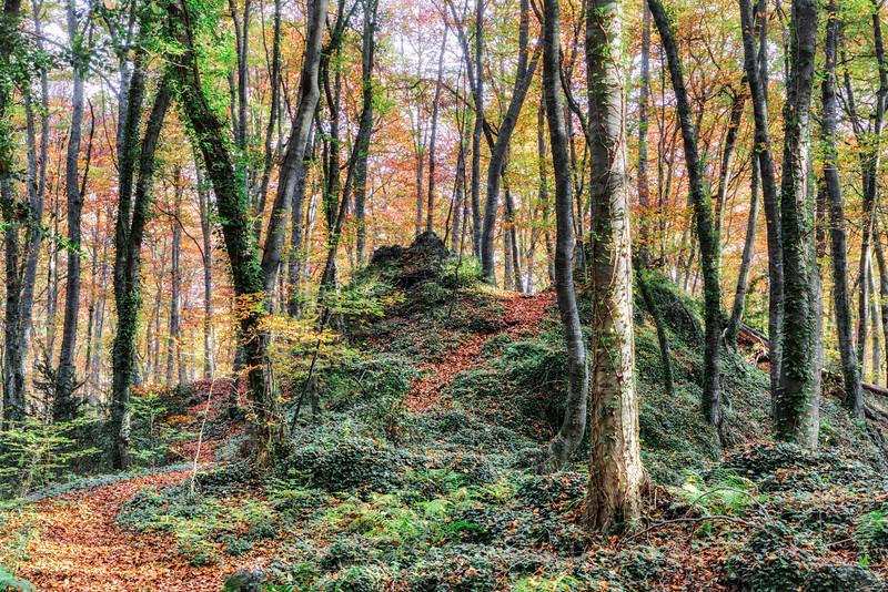 Autumn (Fageda d'en Jordà, Catalonia)