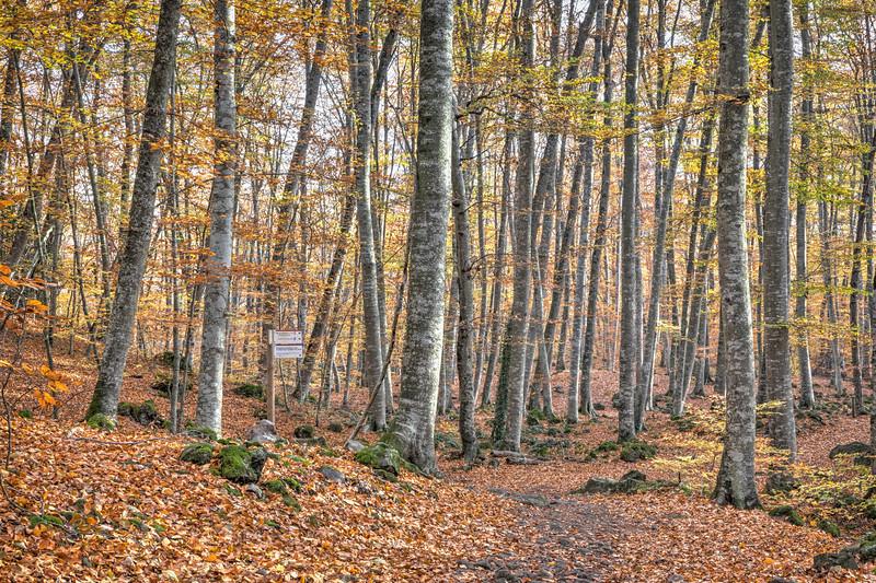 Autumn at La Fageda d'en Jordà