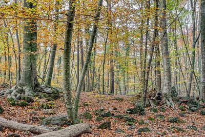 La Fageda d'en Jordà, Autumn 2018 (Catalonia)
