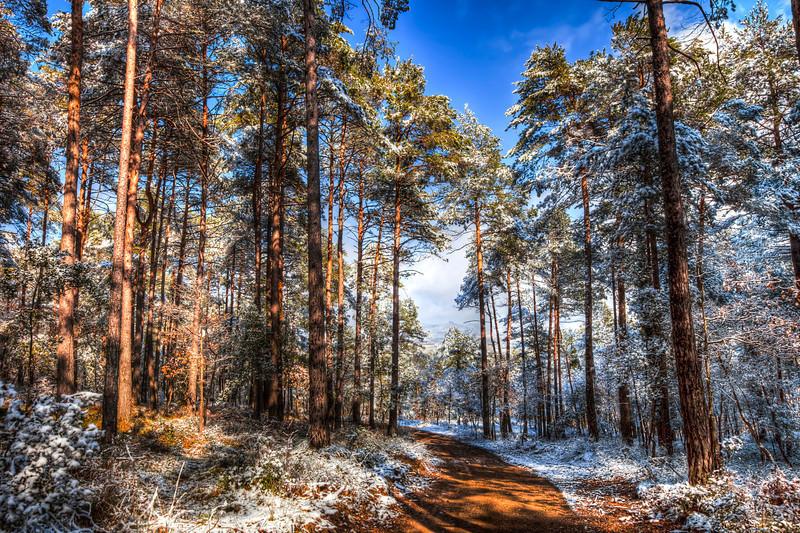 Path Throw The Snow