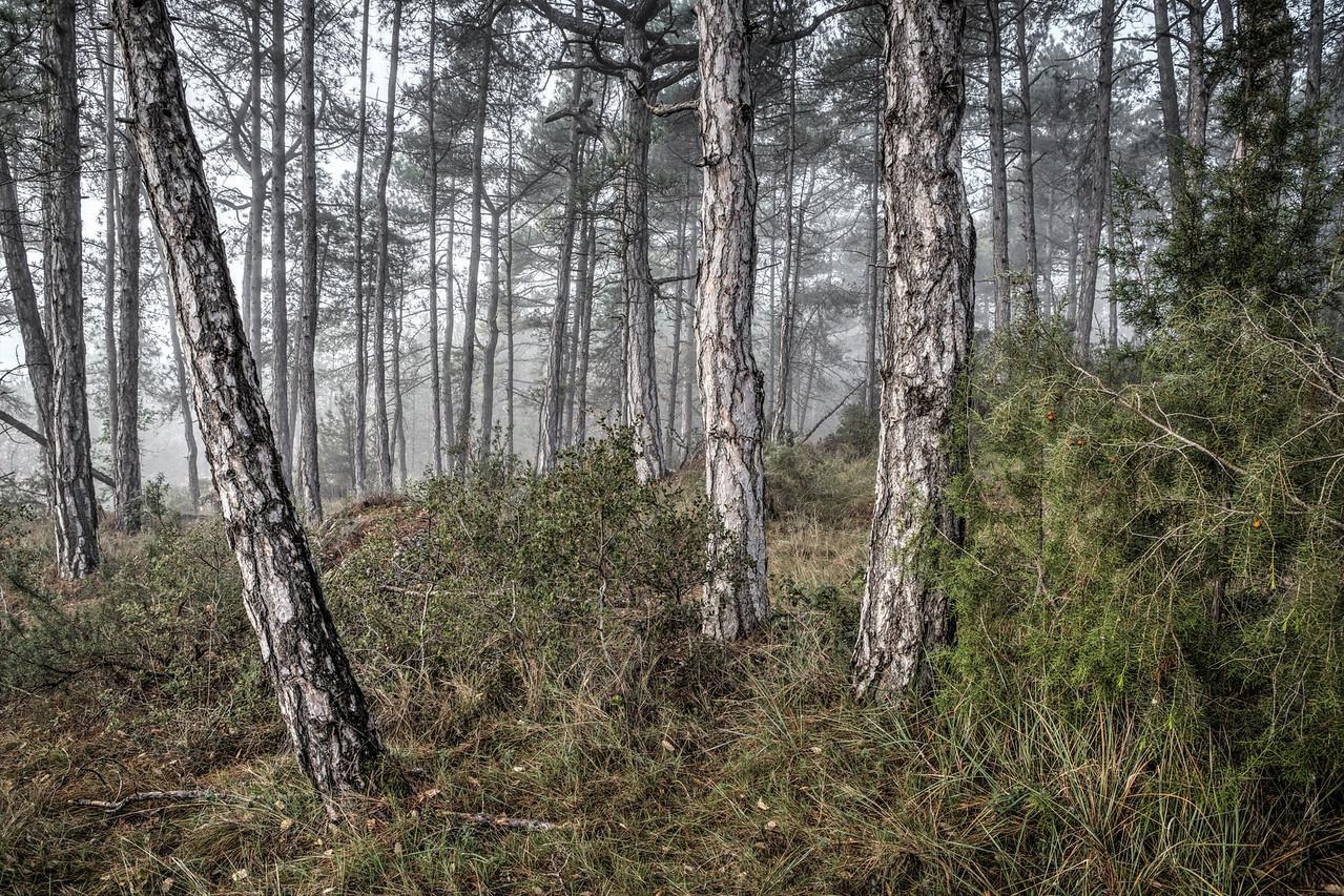 Misty Morning (Baronia de Rialb, Catalonia)
