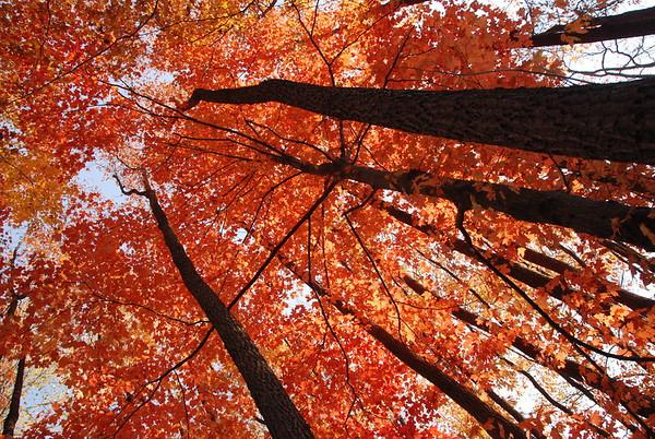 Bright Treetops