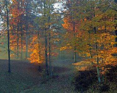 Morning Rays