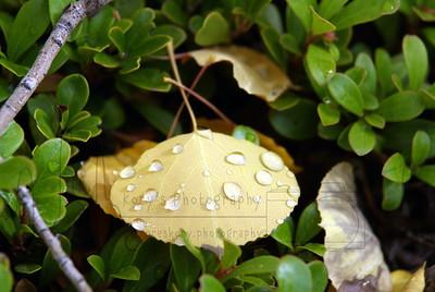 Fall Apen Leaf