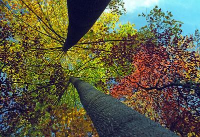 October Treetops