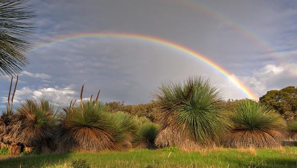 Yacca Rainbow2