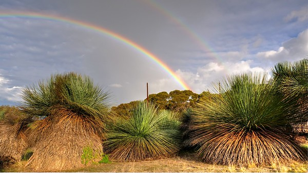 Yacca Rainbow1
