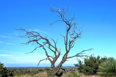 Tree at corner