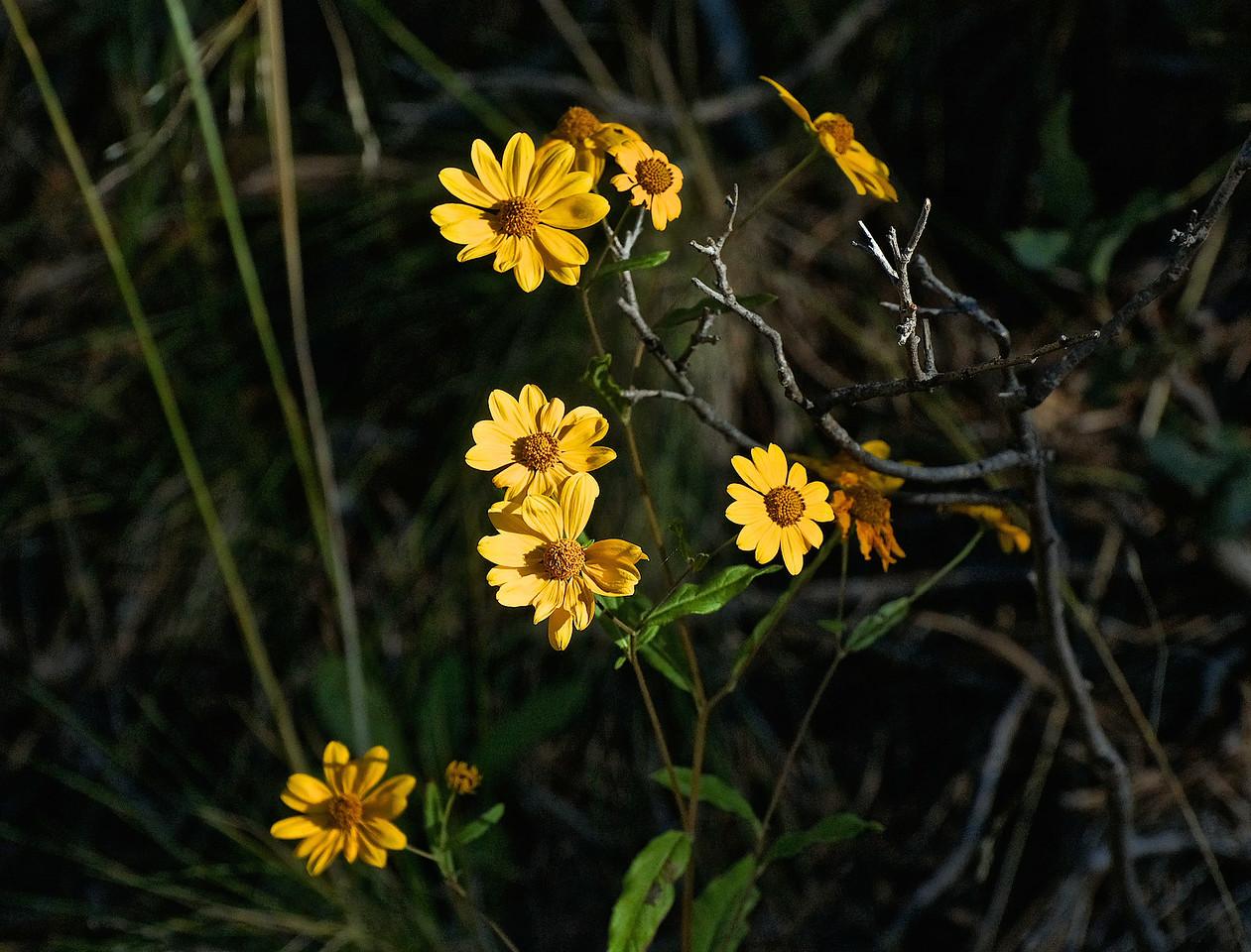 Yellow_softLooking2