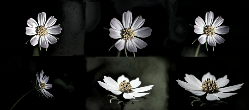 FlowerCollage