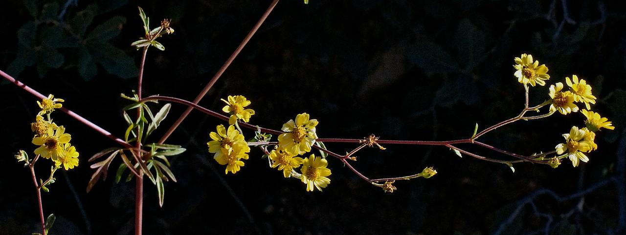 Yellow_stringy - Version 2