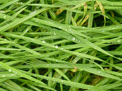 Water on grass copy