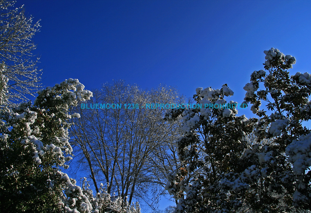 "Snow covered trees framed against bright blue winter sky.<br /> <br /> bluemoon1236; smugmug; <a href=""http://bluemoon1236.smugmug.com"">http://bluemoon1236.smugmug.com</a> ,Bluemoon Fine Photography"