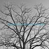 """Leafless tree in winter against cloudless sky in black and white.<br /> <br /> bluemoon1236; smugmug; <a href=""""http://bluemoon1236.smugmug.com"""">http://bluemoon1236.smugmug.com</a> ,Bluemoon Fine Photography"""