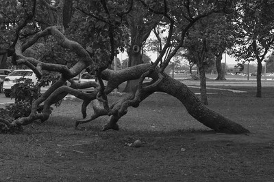 Weird trunk shape at City Park, Brasilia