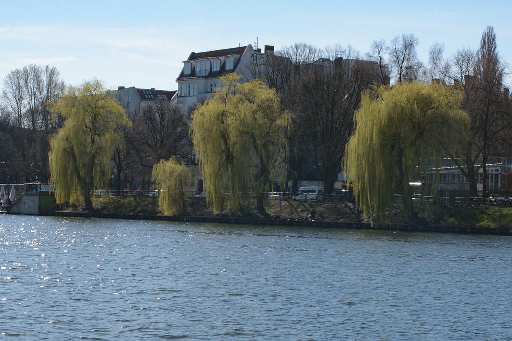 Willows by the River