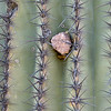 Cactus Rock