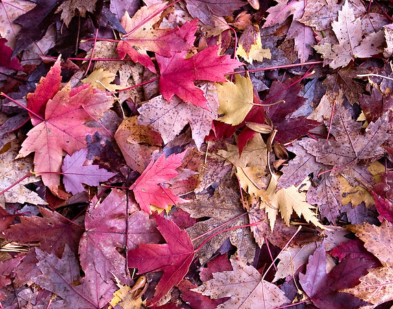 Street Leaves 2