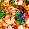 Street Leaves