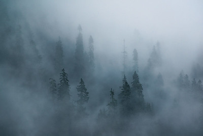 Fog floating between trees at Mt Rainier National Park - Washington