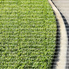 Freshly cut, thick and healthy St. Augustine grass growing close to the curb.