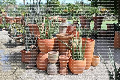 Artistic display of terracotta pots and succulent plants