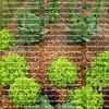 A thriving urban organic garden