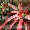 Vertical hanging bromeliad garden growing on a fence