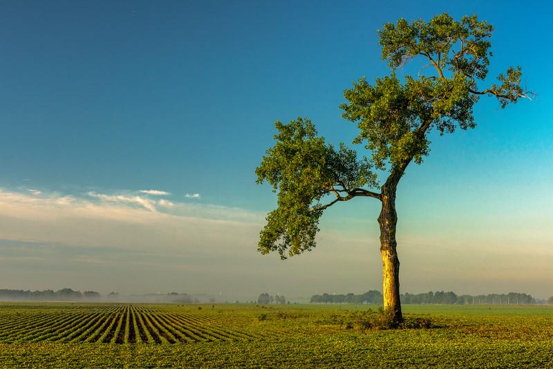 Leafed Tree