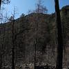Coconino National Forest, Oak Creek Canyon, near Sedona. Coconino County, AZ<br /> 4.6' x 65.1'<br /> Photo by Turner Sharp 2/18/2012