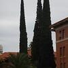 University of Arizona Arboretum