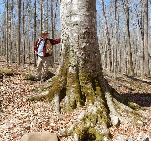 https://photos.smugmug.com/Trees/Fagus-grandifolia/i-9WBjd3W/0/84e254ef/M/DSCN7537-M.jpg