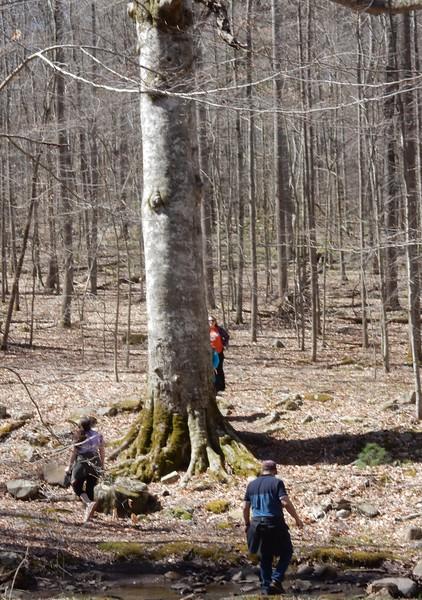 https://photos.smugmug.com/Trees/Fagus-grandifolia/i-xd5fVn9/0/6b503ff4/L/DSCN7531-L.jpg