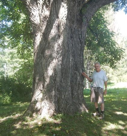 https://photos.smugmug.com/Trees/Juglans-cinerea/i-Nxmdhn8/0/ace241ec/M/DSCN4480-M.jpg
