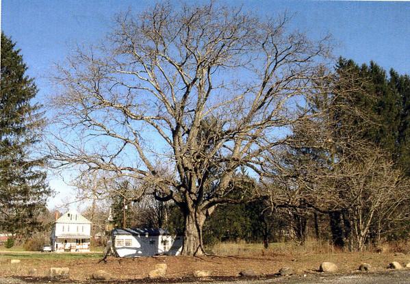 https://photos.smugmug.com/Trees/Juglans-cinerea/i-rFJJvwr/0/fd37fa35/M/img015-M.jpg