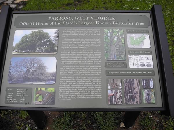 https://photos.smugmug.com/Trees/Juglans-cinerea/i-rzQ6QxB/0/dfc68cbd/M/DSCN0921-M.jpg