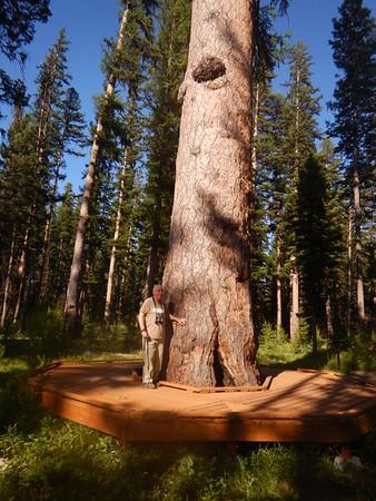 https://photos.smugmug.com/Trees/Larix-occidentalis/i-HzX9VqG/0/5b91458e/M/DSCN3990-M.jpg