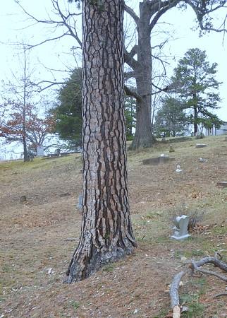 https://photos.smugmug.com/Trees/Pinus-echinata/i-JDQbTHQ/0/ad0c80e9/M/DSCN0996-M.jpg