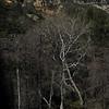 Oak Creek Canyon near Sedonna,Coconino County, AZ<br /> ?' x 119.9' straight tree<br /> Photo by Turner Sharp 3/2/2012