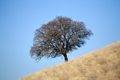 Del Valle State Park, California.   Yes, that's the angle of the hill.