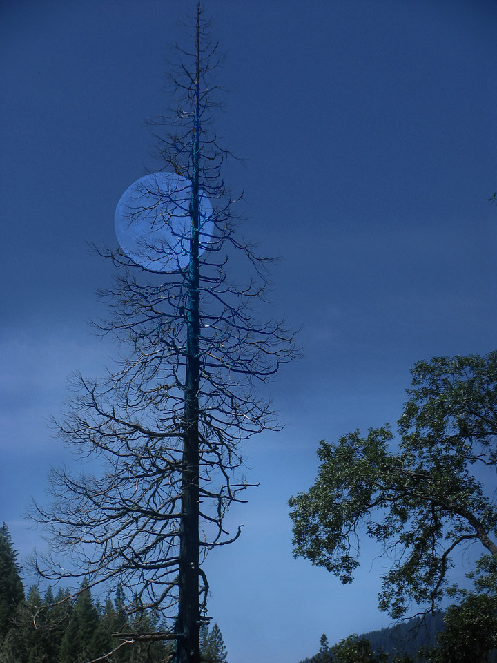 40 - Moonlight in Dunsmuir, Dunsmuir, CA<br /> <br /> (This photo appears in the California Landscape Gallery as well).