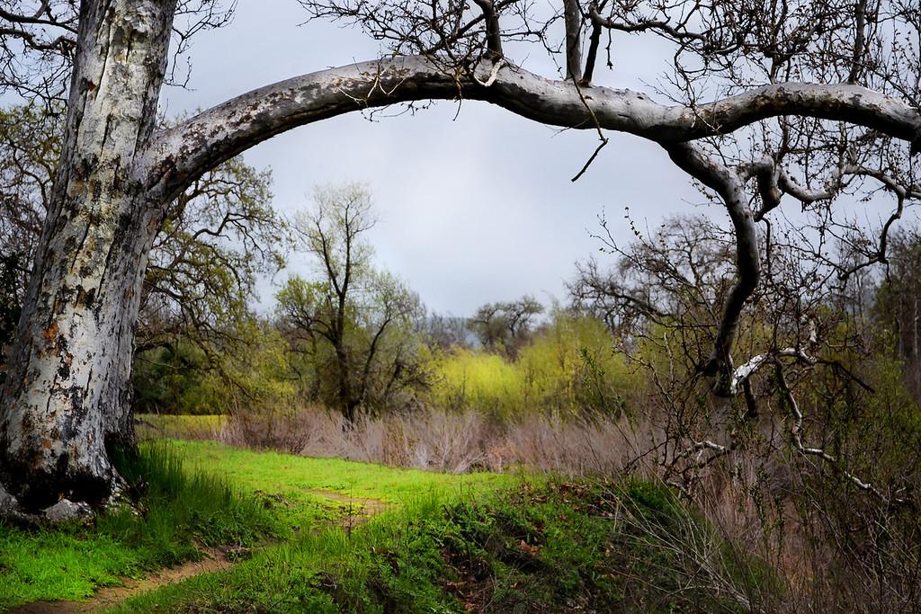 82 - Sycamore Grove Park, Livermore, CA