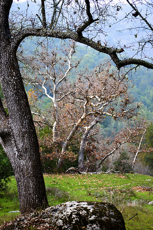 Sunol Regional Wilderness, off trail headed towards Flag Hill